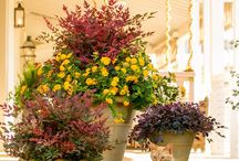 Fall 2013 / Tips and DIY projects to help you get your garden and home ready for the 2013 fall season -- from the landscape to the tailgate party and all of the festive, fall holidays in between.  / by Southern Living Plant Collection