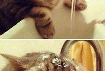 Bolond Macskák