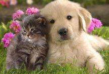Søde dyr / Billeder af dyr