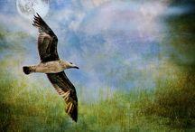 flights OF birds