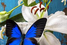 Butterfly & Lilly Mood