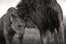 Animal Love / by Susan