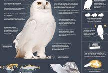 Owls / by Shauna Miller