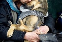 For the love of animals / Because animals are so special