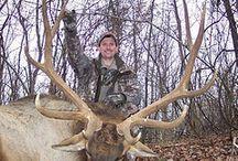 Oak Creek Elk Harvested