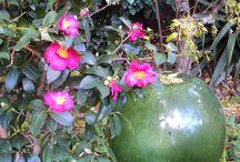 IL MIO GIARDINO -My garden