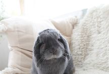 Bunny+ Animal