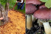 Growing Mushrooms / Learn how to grow these nutritional powerhouses!