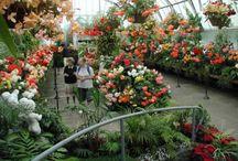 O U T D O O R - Garden Love