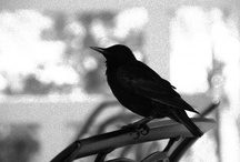 NATURE_BIRDS