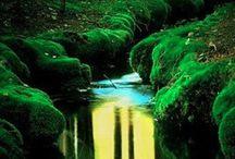 Luonto ja piha