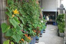 Small garden/balconey