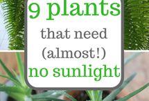 Pot Plants Indoor