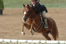 Pony culb