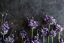 art: flowers / by Kat Alford