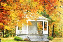 Autumn / by Julianne Ball Williams