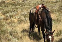 The Rockies and Central USA / Colorado, the Dakotas, Montana, and the Plains states family travel.