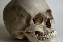 Toni skulls