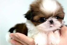Photos Of Cute Puppies! / The cutest. Puppies. Ever.