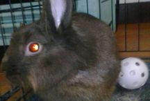 Cocoa the bunny, Jambi the kitty. Monty the python and Precious the mutt, search for musing of Saud animals and other bunny tidbits / Ideas for the stay at home pet / by Maria Torres