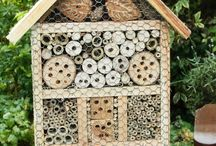 My next project (Insect house)