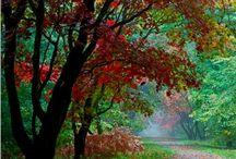 Красота земли