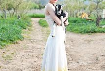 YELLOW WEDDINGS - OH SO FRESH