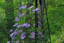 Garden, Plant Supports