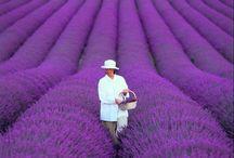 garden / by Hak Hee Yeo