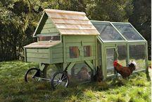Chicken-World