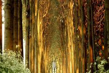 Roads, walkways, & paths / The road, walkway, & path less traveled