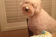 Doodle Love / Goldendoodle / by stephanie shellum