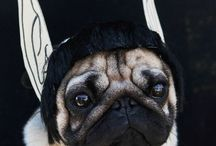 *Pugalicious* / For Pug Lovers!