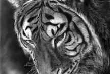 Tigers/Тигры