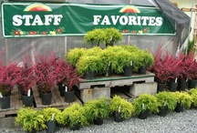 Staff Favorites / by Sunnyside Nursery