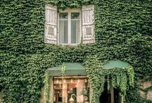 Ivy and vines
