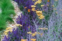 Color Themed Gardens