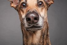 """""""Dogs Questioning the Photographer's Sanity"""" par Elke Vogelsang / La photographe allemande Elke Vogelsang a décidé d'entreprendre une séance photos... avec des chiens. Et dans sa série de clichés intitulée Dogs Questioning the Photographer's Sanity (Des chiens qui questionnent l'intelligence de la photographe), celle-ci semble avoir réussi à les capter au moment où ils semblaient la juger... Cette dernière a donc fait poser les chiens devant la caméra afin de faire ressortir leurs réactions, toutes plus folles les unes que les autres !"""