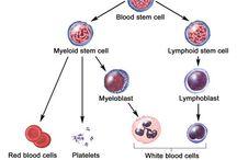 Blood Disorders