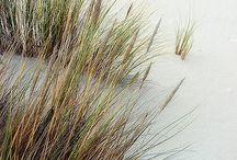 architecture dunes