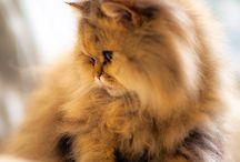 Cats - divine creatures