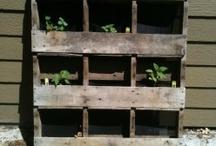 plants tips