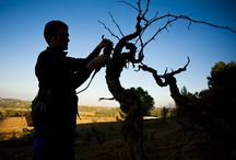 Artisans / We are nature assistants, we help nature to express on its best way in each of our plots and vineyards