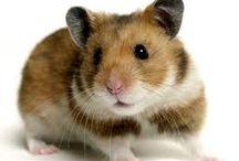 Szczury 20