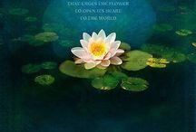 Lotus Blossom Inspiration