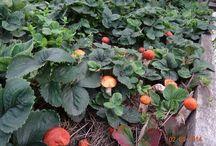 огород, советы по выращиванию