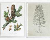 Vintage Tree Prints on Linen Paper