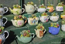 Vase cu plante suculente
