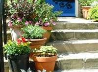 Curb Appeal / Tips and examples ways to add curb appeal to your home.