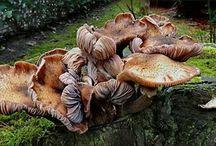Fungi / by Cora Van de Vlekkert